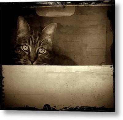 Mollie In A Box Metal Print by Patricia Strand