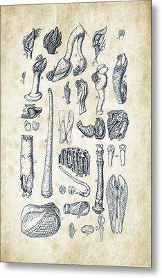 Mollusks - 1842 - 02 Metal Print