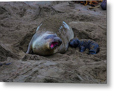 Mom And Pup Bonding Metal Print by Garry Gay