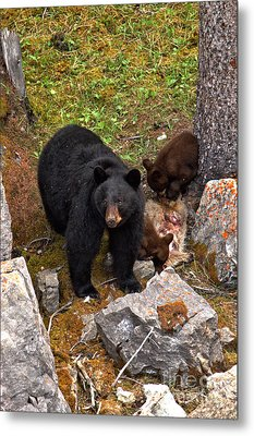 Mom Protecting The Kids Feast Metal Print by Adam Jewell