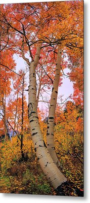 Moments Of Fall Metal Print by Chad Dutson