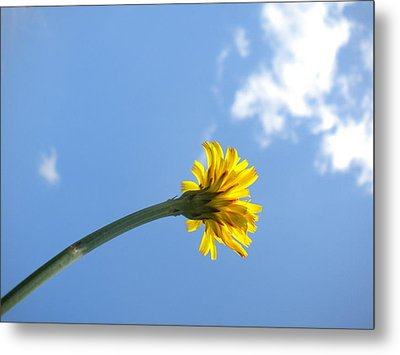 Metal Print featuring the photograph Mommy's 1st Flower by Diannah Lynch