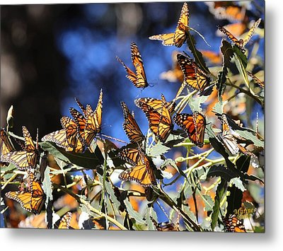 Monarch Active Cluster Metal Print