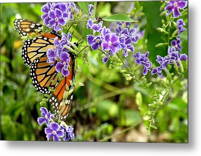 Metal Print featuring the photograph Monarch And Purple Flowers by Rosalie Scanlon