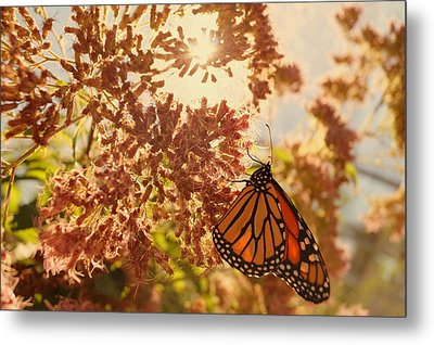 Monarch Beauty Metal Print by Beth Collins