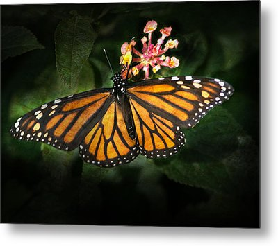 Monarch Butterfly On Lantana Metal Print