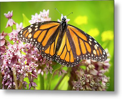 Metal Print featuring the photograph Monarch Butterfly Closeup  by Ricky L Jones