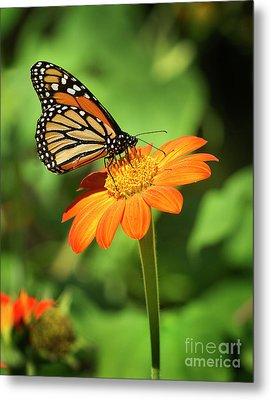 Monarch Butterfly II Vertical Metal Print