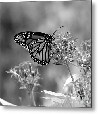 Metal Print featuring the photograph Monarch Butterfly In Bw by Laurinda Bowling