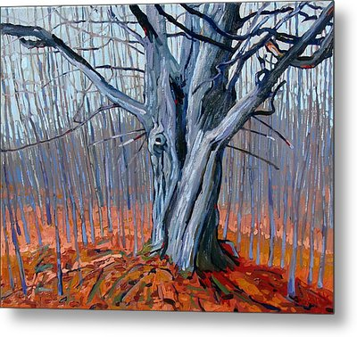 Monarch Of The Forest Metal Print by Phil Chadwick