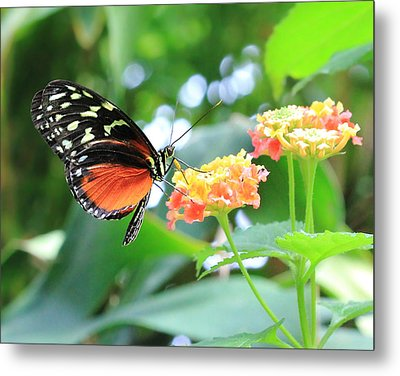 Monarch On Flower Metal Print by Angela Murdock