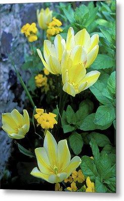 Monet's Fancy Tulips Metal Print by Kathy Yates