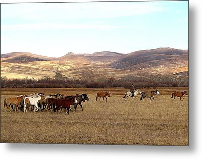 Mongolian Horses And Rider Metal Print by Diane Height