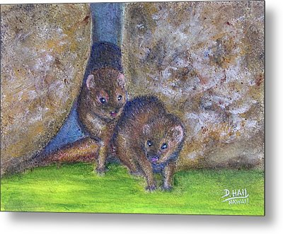 Mongoose #511 Metal Print by Donald k Hall
