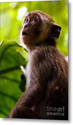 Monkey Awe Metal Print