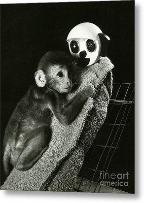 Monkey Research Metal Print by Photo Researchers, Inc.