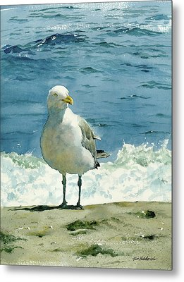Montauk Gull Metal Print by Tom Hedderich