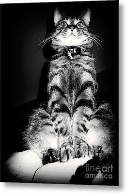 Monty Our Precious Cat Metal Print