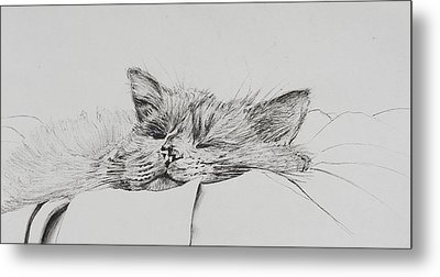 Monty  Sleepy Boy Metal Print by Vincent Alexander Booth