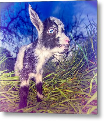 Metal Print featuring the photograph Moo Cow Love Grass by TC Morgan
