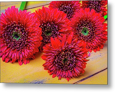 Moody Red Gerbera Dasies Metal Print by Garry Gay