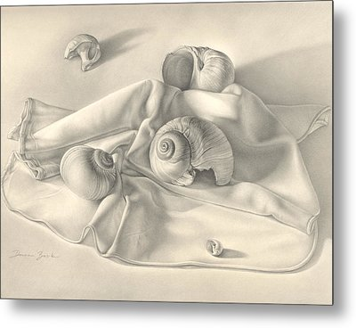 Metal Print featuring the drawing Moon Snail Still Life by Donna Basile