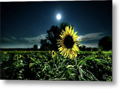 Metal Print featuring the photograph Moonlighting Sunflower by Everet Regal
