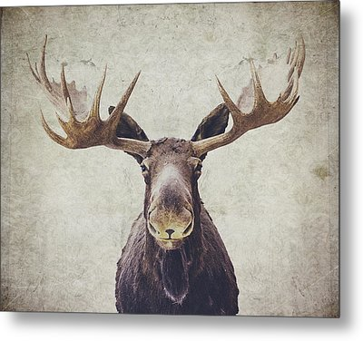 Moose Metal Print by Nastasia Cook