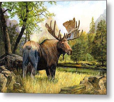 Moose Study Metal Print by Robert May