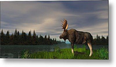 Moose Metal Print by Walter Colvin