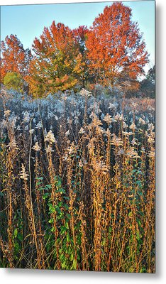Metal Print featuring the photograph Moraine Hills Fall Colors by Ray Mathis