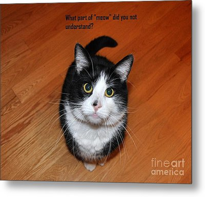 More Words From  Teddy The Ninja Cat Metal Print by Reb Frost