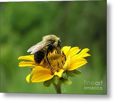 Morning Bee Metal Print
