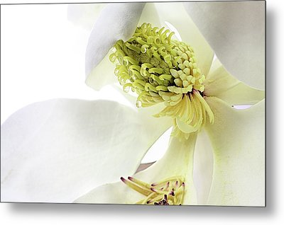 Metal Print featuring the photograph Morning Dew Magnolia by JC Findley