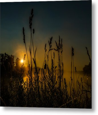 Morning Dew On Tall Grass Metal Print