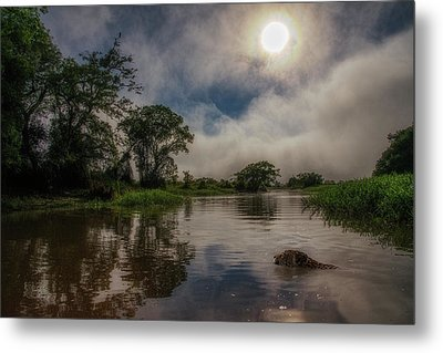 Metal Print featuring the photograph Morning Dip by Wade Aiken