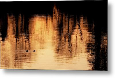Metal Print featuring the photograph Morning Ducks 2017 by Bill Wakeley