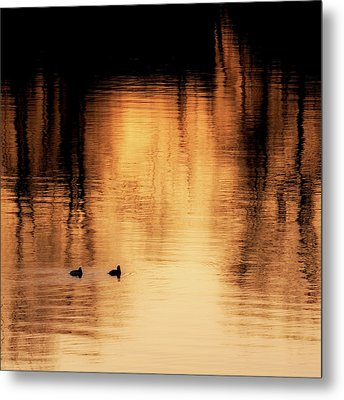 Metal Print featuring the photograph Morning Ducks 2017 Square by Bill Wakeley