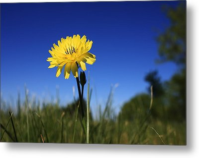 Morning Flower Metal Print by Gulf Island Photography and Images