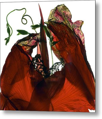Morning Glory Canna Red Metal Print by Julia McLemore