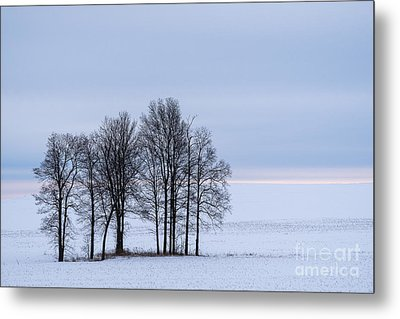 Morning Grace Metal Print