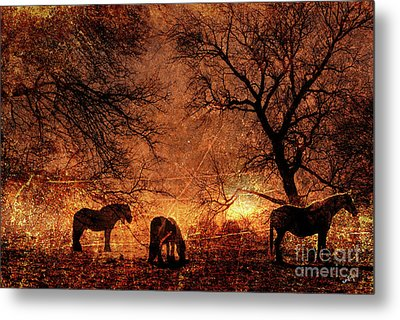 Morning Has Broken Metal Print by Callan Percy