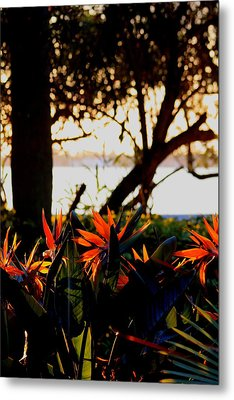 Morning In Florida Metal Print by Diane Merkle