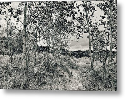 Morning In The Dunes Metal Print by Michelle Calkins