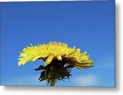 Metal Print featuring the photograph Morning Meditation by Marilynne Bull