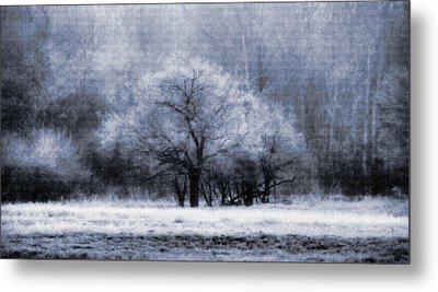 Morning Mood Metal Print by Mimulux patricia no No