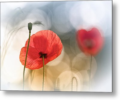 Morning Poppies Metal Print by Steve Moore