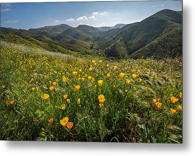 Morning Poppy Hillside Metal Print