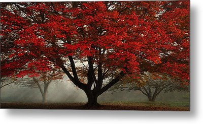 Metal Print featuring the photograph Morning Rays In The Forest by Ken Smith
