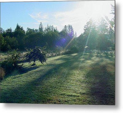 Morning Shadows Metal Print by Shirley Heyn